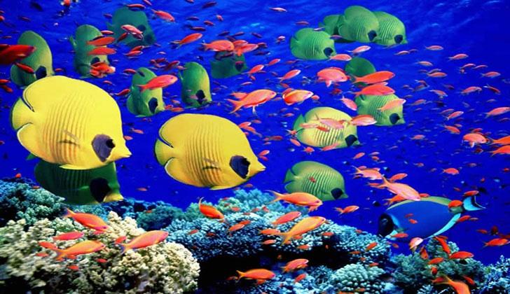 La grande barri re de corail - Grand poisson de mer ...